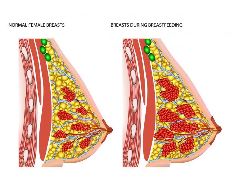 preveniți pierderea în greutate din sânii