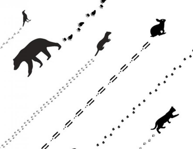 картинки следы животных в лесу