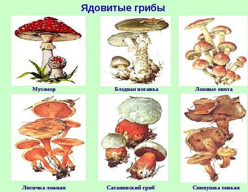 Ядовитые грибы фото и названия