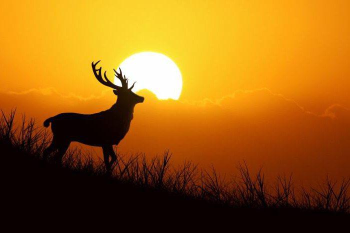 Citazioni Sull Ecologia E Sull Uomo Citazioni Sulla Natura